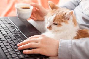 W obecnych realiach coraz więcej spraw można załatwić za pośrednictwem internetu